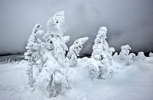 24 hours in pictures: Snow crystals on trees Brocken mountain, Germany