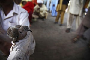 24 hours in pictures: Islamabad, Pakistan. Boy holds a bird