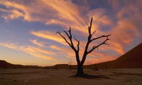 Drought in Namib-Naukluft Park, Namibia