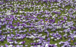 Signs of Spring 2010: Readers photographs gallery on Flickr