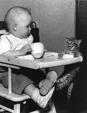 Tall tails: Kitten Hangs From Infant's High Chair