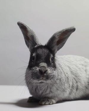 Tall tails: A rabbit
