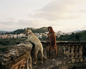 Tall tails: Two dogs looking over a wall