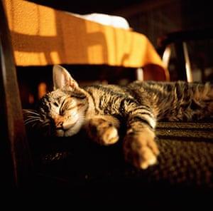 Tall tails: Tabby cat lying asleep on floor
