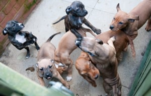 London: puppies at Harefield Dogs Trust re-homing centre
