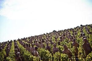 Spencer Tunick: Burgundy vinyard, central-eastern France