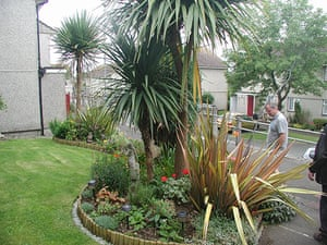 postively public housing: palm trees garden cornwall