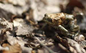 Week in Wildlife: A toad is on the way to a lake in a forest near Darmstadt