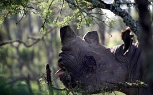 Week in Wildlife: Rhino in Kenya