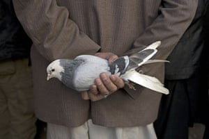 24 hours: An man holds a pigeon at the bird market in Kabul