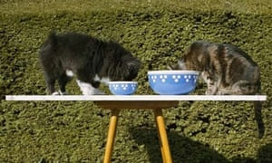 cats-eating-from-bowls