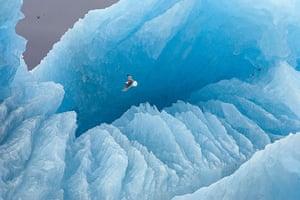 Paul Nicklen: Polar Obsession