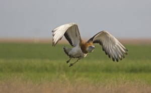 Natural England Report: Lost Life: England's lost and threatened wildlife