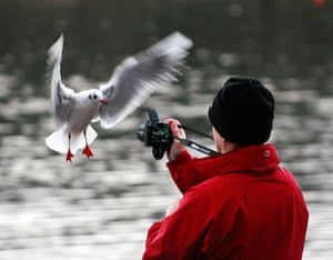in pictures: hobbies: seagull and photographer