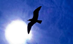 Duddingston: Seagull in the Sun at Duddingston