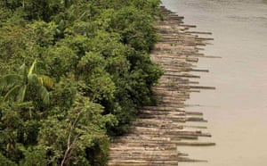 Week in Wildlife: Illegally logged timber, Guam  River Delta, state of Para, Brazil