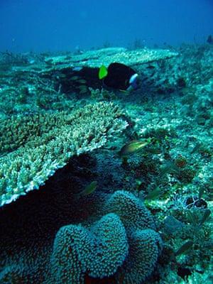 Week in Wildlife: Oil spill: marine life near Douglas Shoals, Great Barrier Reef, Australia