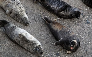 Week in Wildlife: National Seal Sanctuary Releases Rescued Pups Back Into The Wild