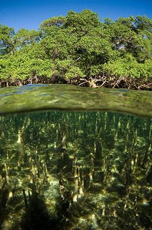 Week in wildlife: Mangrove forests in worldwide decline
