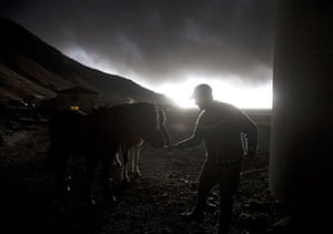 Volcano in Iceland: Farmer Thorarinn Olafsson tries to lure his horses in Drangshlid