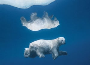 iLCP: Auction for 40 Greatest Nature Photographs of All Time