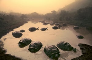 In Pictures The Greatest Nature Photographs Of All Time Environment The Guardian