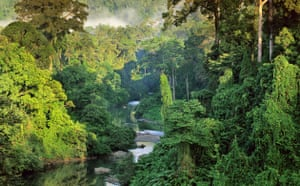 Borneo's New World: River in Lowland Rainforest of Danum Valley
