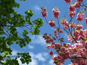 Spring Blossom : Flickr group photographs