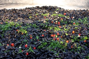 Big Food: The world's largest Impepata di cozze