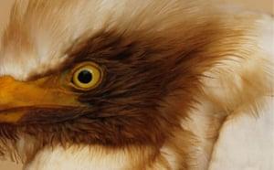 Deepwater Horizon: Gulf Oil Spill Begins To Reach Land : An oil stained cattle egret