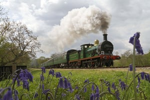 Bluebells: Dave Bowles: Bluebell Railway, Sussex