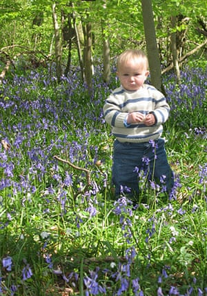 Bluebells: Susie Leverton: Alfred in Crab Wood, near Winchester