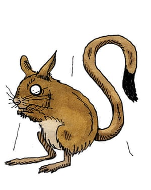 Know your rodent: Know Your Rodent