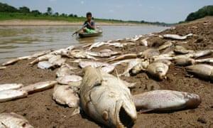 Biodiversity in focues: Amazon, Brazil
