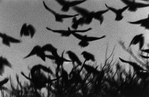 Ravens: Ravens by Masahisha Fukase