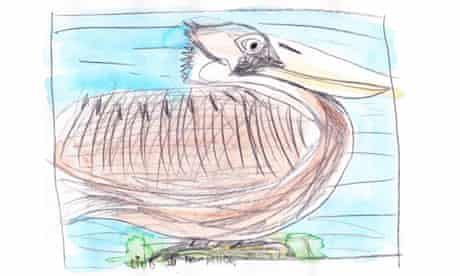Brown pelican drawing by Olivia Bouler