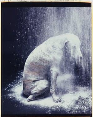 Polaroid Collection: Polaroid Sothebys New York Auction