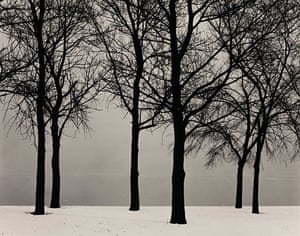 Polaroid Collection: Chicago (Trees in Snow)