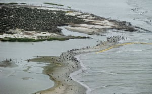 Deepwater Horizon oil rig: Oil spill affects wildlife: Birds at the Breton Island sanctuary