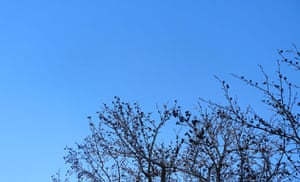 show and tell: Shannyn: blue sky