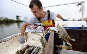 Deepwater Horizon oil rig: Oil spill : : Local fishermen