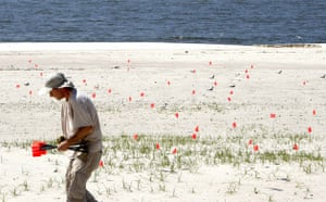 Deepwater Horizon oil rig: Oil spill reaches Louisiana coast :  the nests of Least Terns, Biloxi