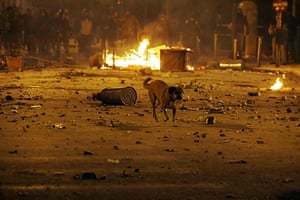 Greek riots dog: 8 December 2008: A stray dog crosses a street during riots in Athens