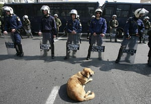 Greek riots dog: 4 March 2009: A dog sits in front of riot police during a rally in Athens