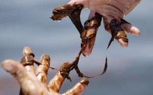 BP oil spill: Deepwater Horizon oil spill :