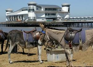 Grand Pier: Donkeys on the beach