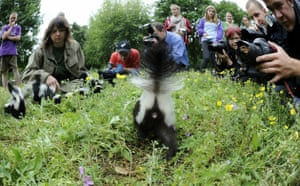 Week in wildlife: A young skunk is in the focus of photogr