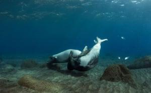 Week in wildlife: Mediterranean Monk Seals Deserta Grande, Madeira, Portugal