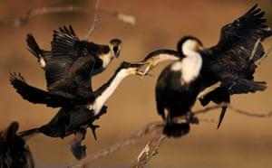 Week in wildlife: water birds at Pilanesberg National Park