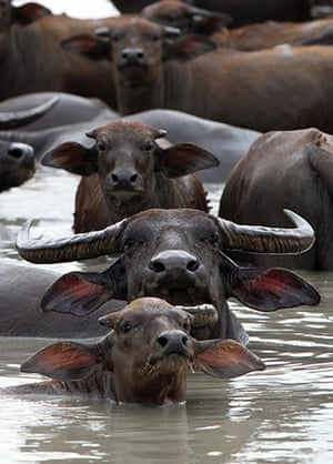 Week in wildlife: Thailand drought